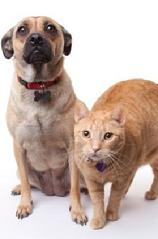 Cat and Dog Pee Pee or Urine Removal